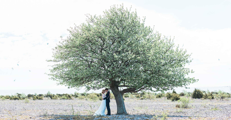 Fårö, bröllop gotland